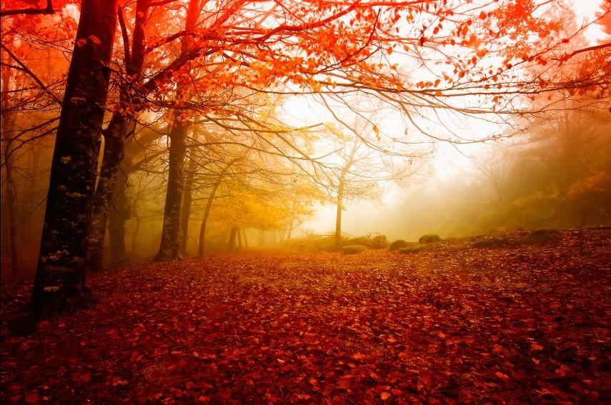Изображение осень