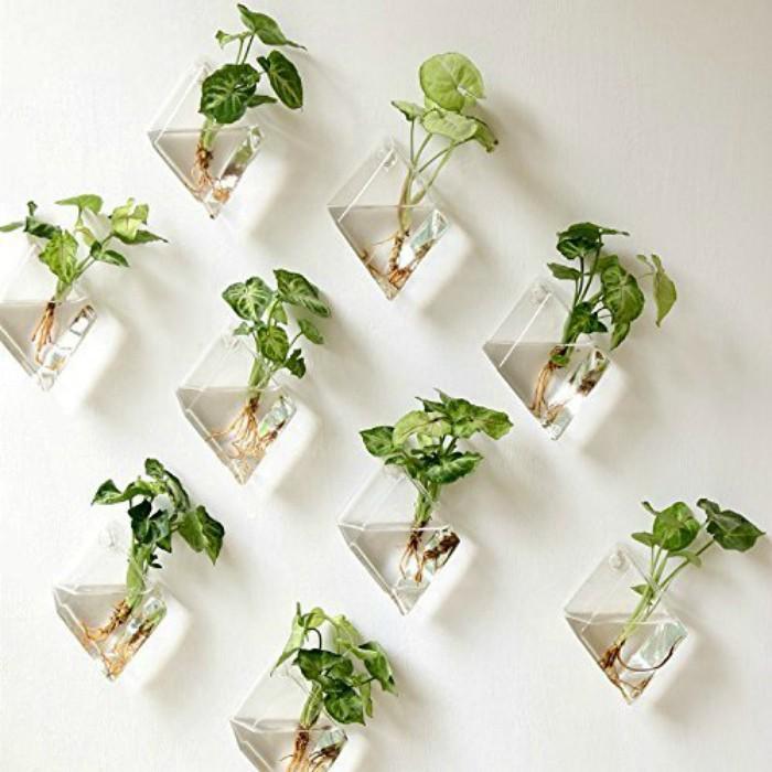 растения в вазах