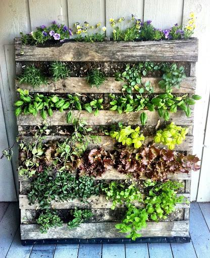 гидропоника, растения на стене